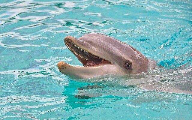 Миф о дельфинах-спасателях